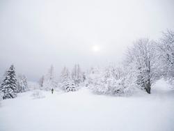 Ski mountaineering, ski touring among the snowy trees at high altitude