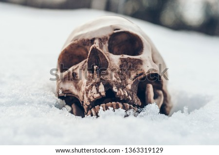 skull covered with snow and ice.  human skull. buried human remains