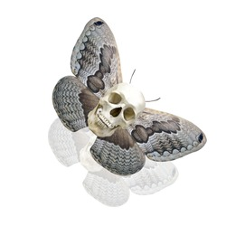 skull with butterfly wings. isolated on white background