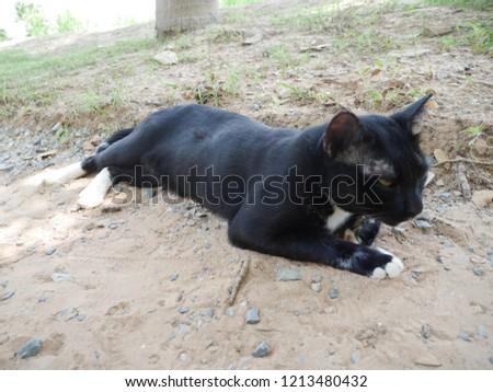 Sleeping cats on the lawn , blackcat