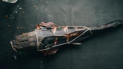 smoked ready-made fish African catfish