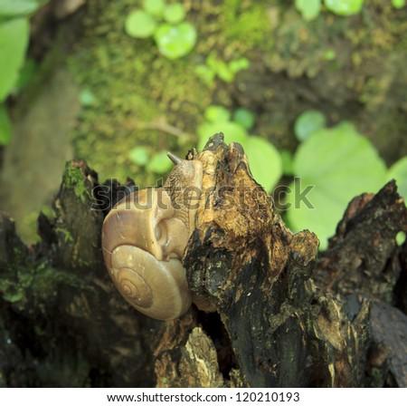 Snail at morning