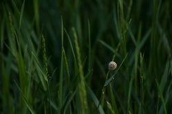 Snail in green grass in a meadow