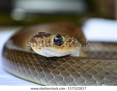 snake isolated on white