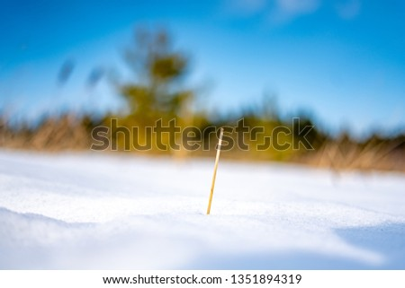 Snow close up and a sticking out sprig in the foreground, and a blurred background behind. #1351894319