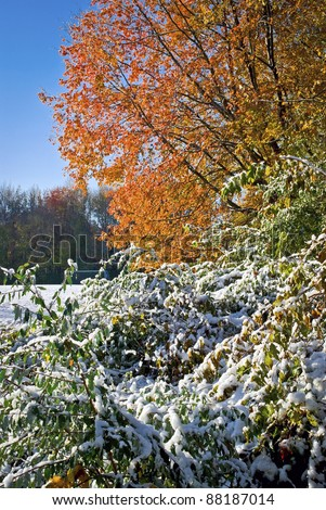 """Snowy Autumn"" Snow covered bushes an Autumn leaves still on the trees in this park in Manalapan, NJ."