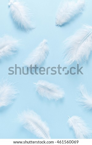 Soft, fluffy white feathers on pastel blue background. Minimalism style.