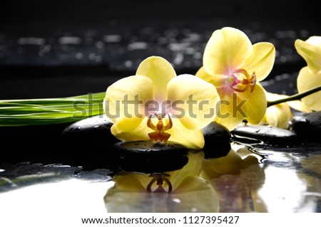 Spa still life with wet pebbles and yellow orchid with bamboo leaves