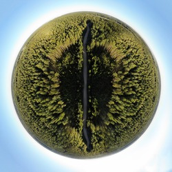 360 spherical creative background. This is sphere panorama 360. Road in summer forest from drone. Aerial photo made in Belarus. This green ball of forest grass and alone road i made in small village.