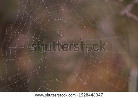 spider web with dew drops #1528446347