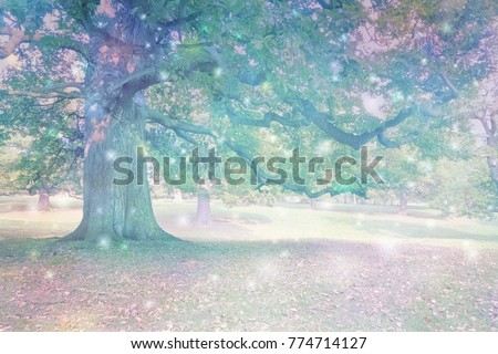 Spirit Orbs attracted to Ancient Oak Tree  - Big old oak tree with ethereal lighting and many different coloured orb lights depicting spiritual entities with copy space                                #774714127