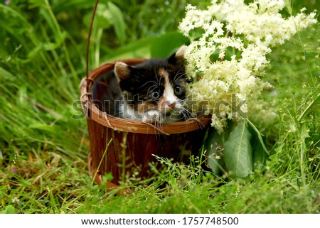 Spotted redhead with a black kitten in a basket on green grass on a background of Sambucus flowers. Gift to a child or beloved woman. Postcard. Place milking inscriptions.