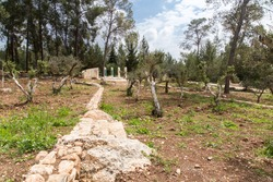 Spring forest Ben Shemen with a glade of olive trees. White stone path and pillars. Israel