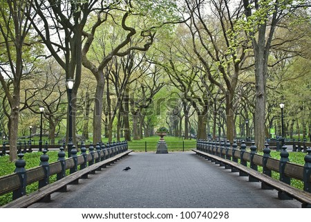 """""""Spring Sycamore Trees"""" An early Spring view of the Central Park in The Mall area."""