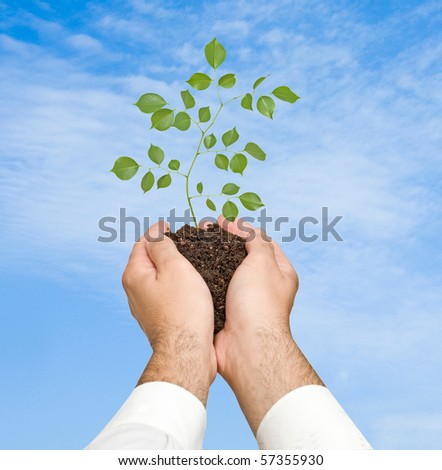 sprout in palms as a symbol of nature protection