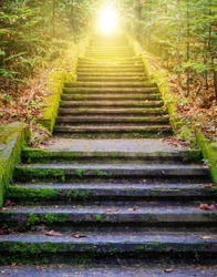 Steps leading up to the sun.  Way to God .  bright light from heaven .  Religious background  . Sunlight in the green forest .  Door to orange sunset . Light from sky .