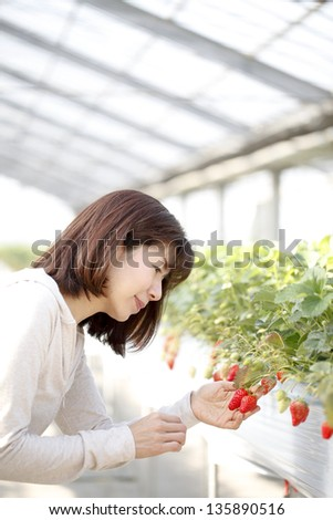 strawberry hunting