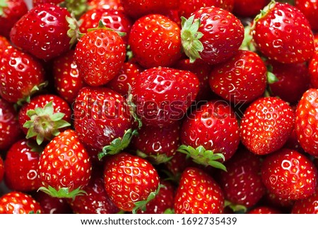 Strawberry or garden strawberry (also known as strawberry, from Dutch aardbei) is a strawberry variety that is the most widely known in the world. Like other species in the genus Fragaria.