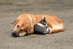 stray dog and cat