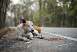 Stray dogs lie on the side of the road with food laid around them