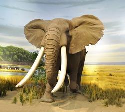 stuffed African  Elephant