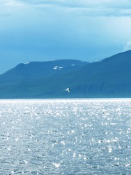 Stunning shimmering ocean with mountain and seabird captured in Iceland