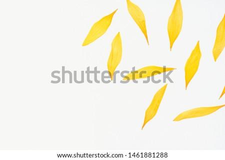 sunflower petals, sunflower petals on a white background, dried sunflower petals, yellow petals, herbarium #1461881288