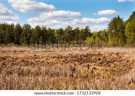 Sunny day spring May marshland landscape. Magazyn Nature Reserve in Poland, Europe. Zdjęcia stock ©