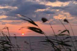 Sunrise silhouette through shoreline reeds. Dnepr River. Ukraine