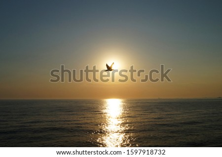 Sunset at Marmara Sea, one seagull, reflections on the water, tranquil scene.