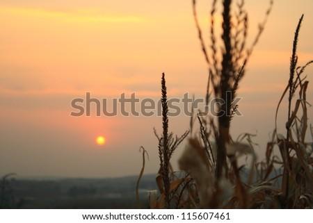 sunset, corn feathers, landscape