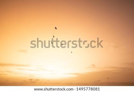 sunset landscape with pretty orange colors #1495778081