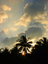 Sunset on tropical island in Thailand, black silhouettes of palm trees on the background of sunset, sun rays in the sunset sky