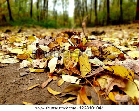 Őszi levél hullás  Stock fotó ©