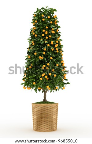 tangerines tree isolated over white