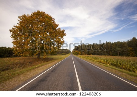 the asphalted road to an autumn season