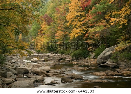 The  Bald River  in Tennessee with fall colors on the trees and the twisting and winding path of the river make for an amazingly beautiful river scene.