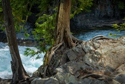2296_The beauty of rocks and trees along the banks of McDonald Creek at Glacier National Park