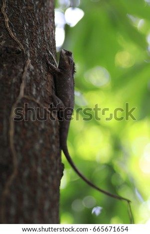 .the brown chameleon on the tree and white and green bokeh #665671654