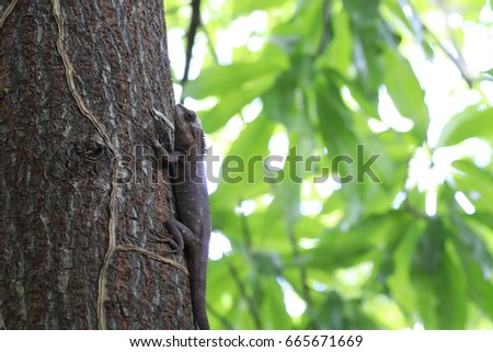 .the brown chameleon on the tree and white and green bokeh #665671669
