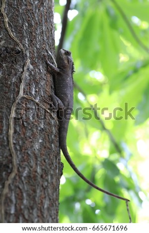 .the brown chameleon on the tree and white and green bokeh #665671696