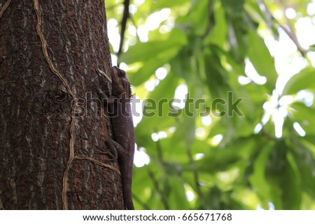 .the brown chameleon on the tree and white and green bokeh #665671768
