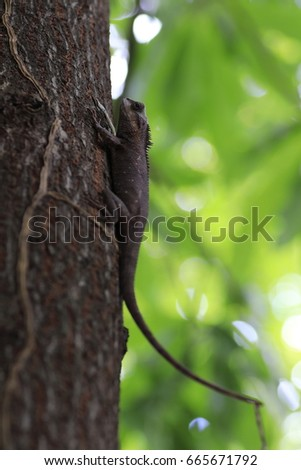.the brown chameleon on the tree and white and green bokeh #665671792