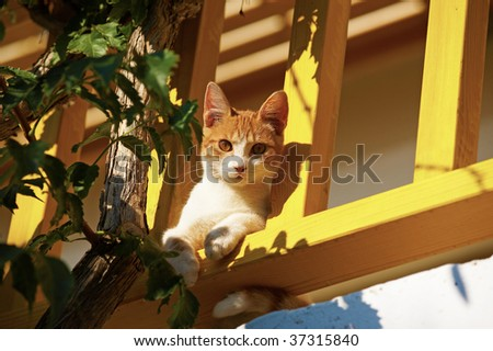 The cat lies on a balcony and looks to camera - stock photo