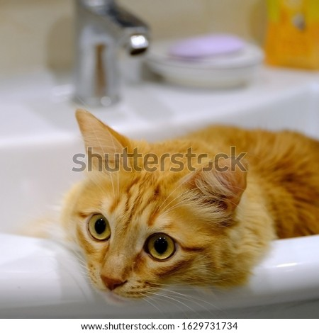 The cat sits in the washbasin