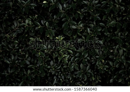 The foliage wall gives a mysterious and mysterious feeling