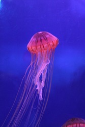 The jellyfish are beautiful but poisonous.