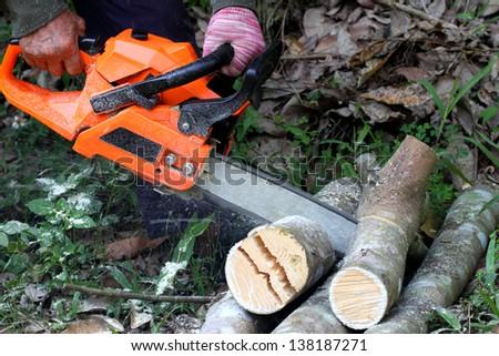 The lumberjack cutting the log of wood - stock photo