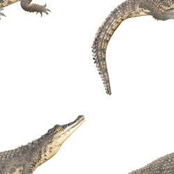 The Nile crocodile (Crocodylus niloticus) is a large, dangerous carnivorous reptile. Seamless pattern.