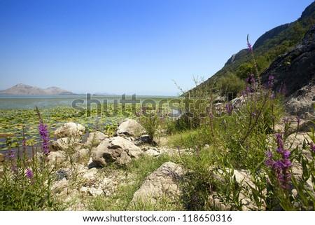 the photo of Lake Skadar in summertime of year